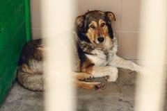 El perro triste que miente en la jaula del refugio, momento emocional triste, me adopta co Fotos de archivo libres de regalías