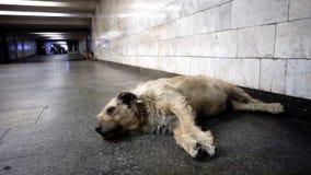 El perro viejo duerme en el fondo de la transición metrajes
