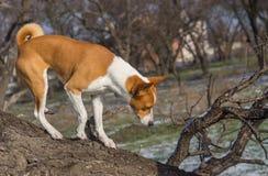 El perro viene abajo de rama de árbol baja en su territorio Imagen de archivo libre de regalías