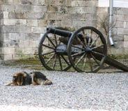 El perro y el arma Fotografía de archivo libre de regalías