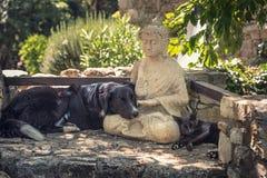 El perro y el gato descansan sobre una estatua de Buda en los pasos de piedra Imagenes de archivo