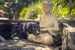 El perro y el gato descansan sobre una estatua de Buda en los pasos de piedra Foto de archivo