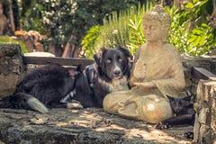 El perro y el gato descansan sobre una estatua de Buda en los pasos de piedra Fotografía de archivo libre de regalías