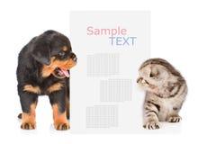 El perro y el gato mira a escondidas hacia fuera de detrás la cartelera y la mirada de t Imagen de archivo libre de regalías