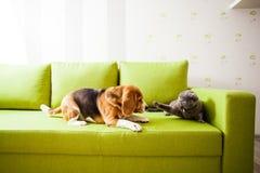 El perro y el gato están jugando imagenes de archivo