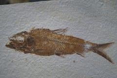 el pescado aterrorizado permanece foto de archivo libre de regalías