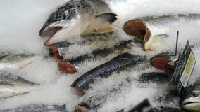 El pescado es fresco-congelado en hielo almacen de video