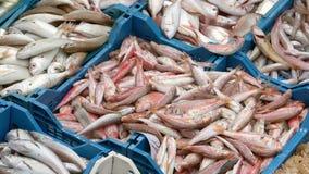 El pescado fresco presentado en un mercado Ken quema efecto metrajes