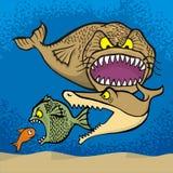 El pescado grande come pequeño Imagen de archivo libre de regalías