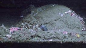 El pescado oculta en un submarino del fondo del mar en el océano de la fauna Filipinas metrajes