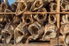 El pescado secado dirige del bacalao apilado en una plataforma Foto de archivo libre de regalías