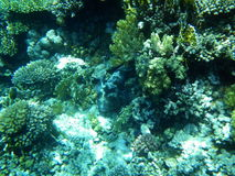 el Pescado-tanque de corales. Fotos de archivo libres de regalías