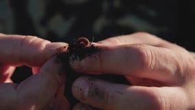 El pescador fija la lombriz de tierra en un gancho de pesca almacen de metraje de vídeo