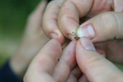 El pescador pone un cebo Una afición del ` s del hombre El hombre está pescando Gancho en el gancho foto de archivo
