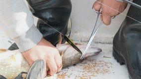 El pescador toma el gancho de la boca de Pike, sacando el gancho de boca del ` s de los pescados Zafe las pinzas de la captura de metrajes