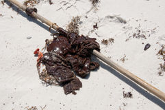 El petróleo se lava en tierra en la playa Fotos de archivo