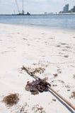 El petróleo se lava en tierra en la playa Foto de archivo libre de regalías