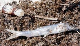 El petróleo se lava en tierra en la playa Fotos de archivo libres de regalías