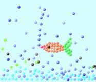 El pez de colores flota sobre los guijarros Foto de archivo libre de regalías