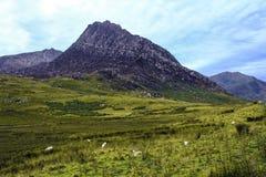 El pico famoso de Tryfan en Snowdonia, País de Gales del norte, Gran Bretaña foto de archivo libre de regalías