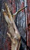 El pie del pájaro Fotos de archivo libres de regalías