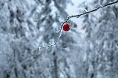 El piel-árbol del ` s de la Navidad y del Año Nuevo juega en árbol forestal Fotos de archivo