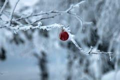 El piel-árbol del ` s de la Navidad y del Año Nuevo juega en árbol forestal Fotos de archivo libres de regalías