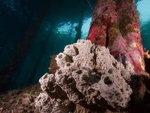 El pilar del embarcadero adornó con las esponjas hermosas en Raja Ampat, Indonesia Fotos de archivo libres de regalías