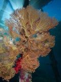 El pilar del embarcadero adornó con los corales suaves en Raja Ampat, Indonesia Fotografía de archivo libre de regalías