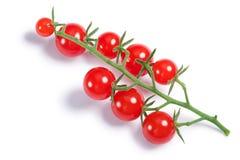 El pimpinellifolium minúsculo de la solanácea de los tomates en la vid, trayectorias, top compite Fotografía de archivo
