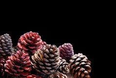 El pinecone rojo Imágenes de archivo libres de regalías