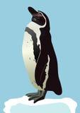 El pingüino Imagen de archivo libre de regalías