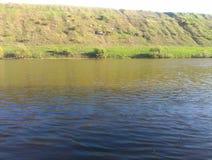 El pino del río de Bystraya fotografía de archivo