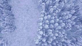 El pino joven del invierno azul hermoso y el vídeo de la opinión aérea del bosque de la nieve de los árboles de hojas caducas con almacen de metraje de vídeo