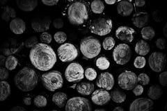 El pino registra el fondo fotografía de archivo libre de regalías