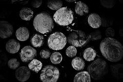 El pino registra el fondo fotos de archivo libres de regalías
