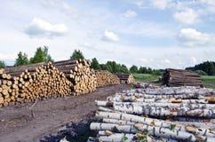 El pino y el abedul enmaderan los registros apilados en campo cerca de bosque Imagen de archivo libre de regalías