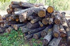 El pino y el roble secos abre una sesión una pila en la hierba Imagen de archivo libre de regalías
