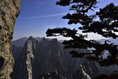 El pino y la montaña Imagen de archivo libre de regalías