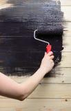 El pintor de la mujer pinta la pared de madera en negro Fotos de archivo