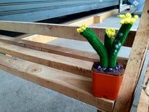 El piso de madera minúsculo del baile de fin de curso de seda del cactus Fotos de archivo