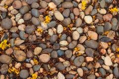 El piso de piedra sucio del primer con las hojas secadas texturiza el fondo Fotografía de archivo