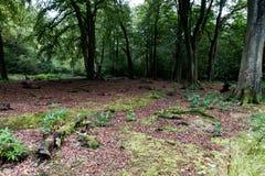 El piso del bosque Fotografía de archivo libre de regalías