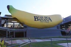 El plátano grande, Coffs Harbour Imagen de archivo