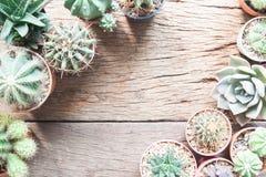 El plano creativo pone el escritorio que cultiva un huerto con las plantas del cactus de la variedad en d Fotografía de archivo