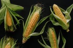 el plano pone con las mazorcas de maíz frescas crudas dispuestas imagen de archivo
