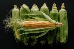el plano pone con las mazorcas de maíz frescas crudas dispuestas foto de archivo
