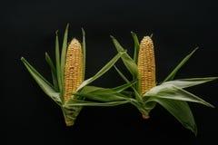 el plano pone con las mazorcas de maíz frescas crudas dispuestas fotos de archivo