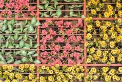 El plantador de la ejecución adornó un multi de colores. Fotos de archivo