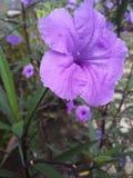 El poder de la flor Foto de archivo libre de regalías